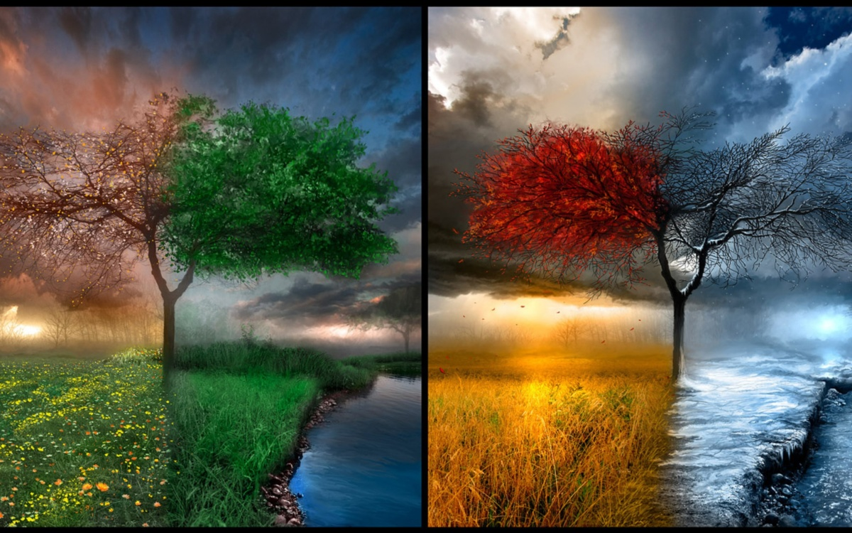 one-tree-four-times-of-the-year-four-seasons_5120x3200
