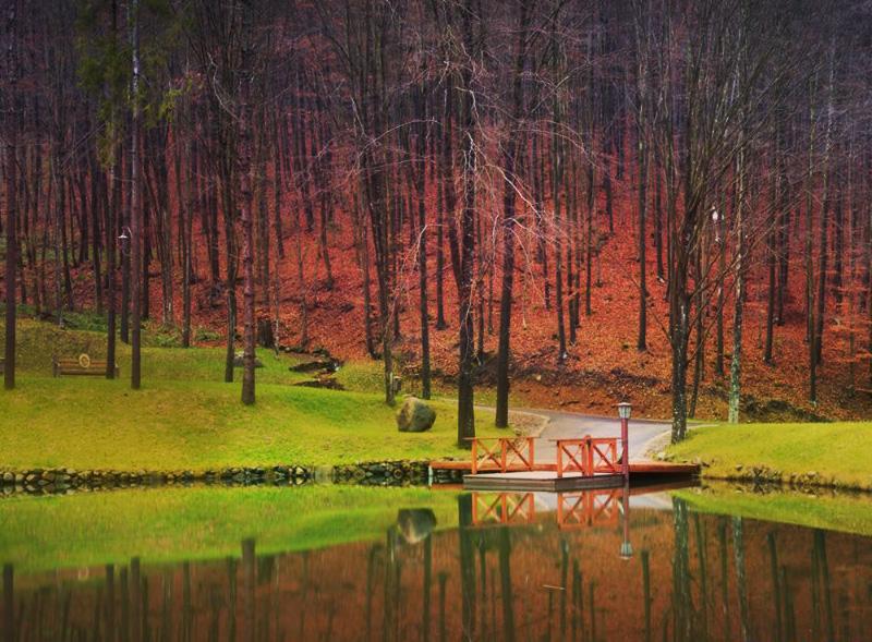 Парк Шенборна, урочище Воєводино, Закарпаття