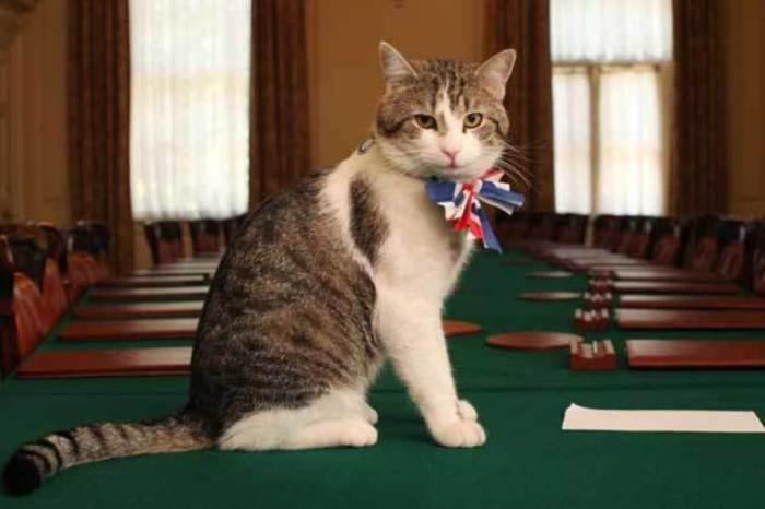 Кіт Ларрі - головний мишолов на Даунінг-стріт. | Фото: assets.publishing.service.gov.uk.