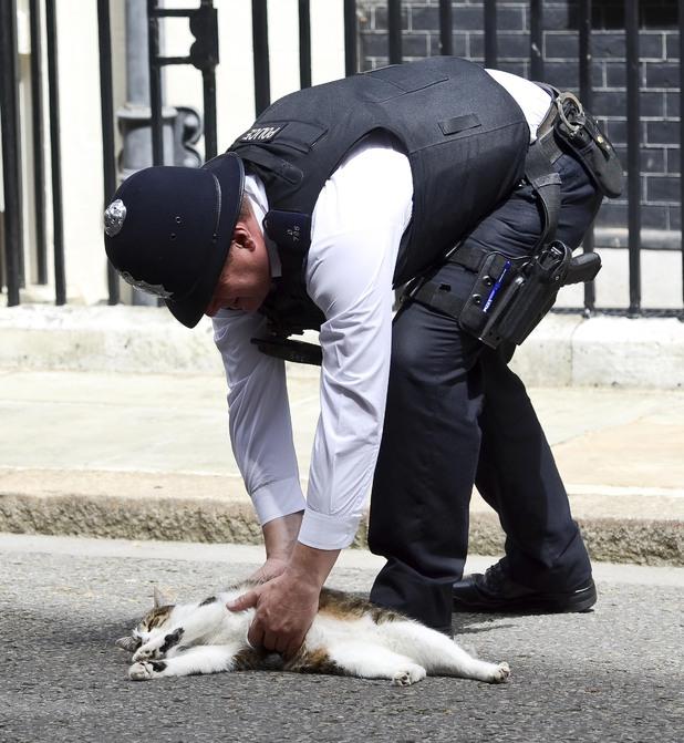 Ларрі в обіймах поліцейського. | Фото: motiongroove.com.