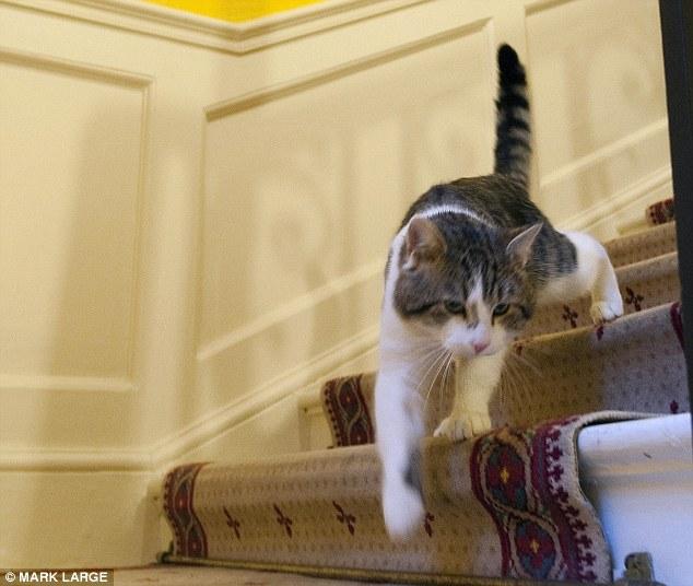 Вгору по кар'єрних сходах: з притулку в резиденцію глави уряду. | Фото: dailymail.co.uk.