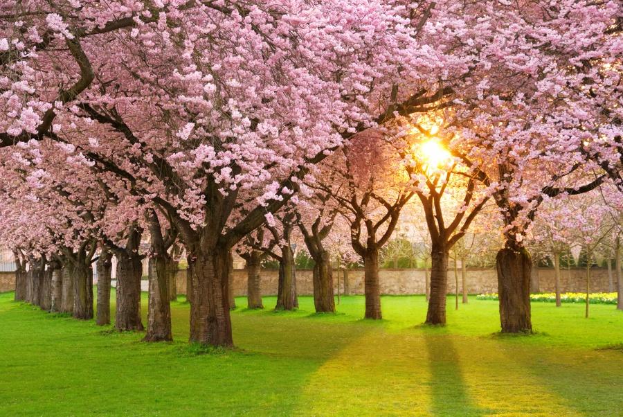 Ось як настає весна у різних куточках планети
