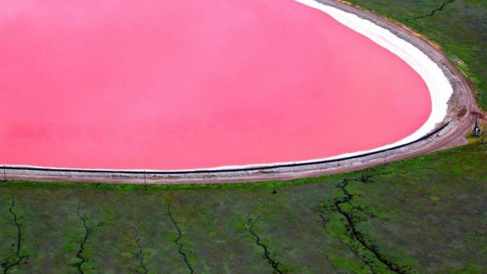 Своїм рожевим кольором озеро зобов'язане галобактеріі, здатним жити в середовищі з високим вмістом солей.